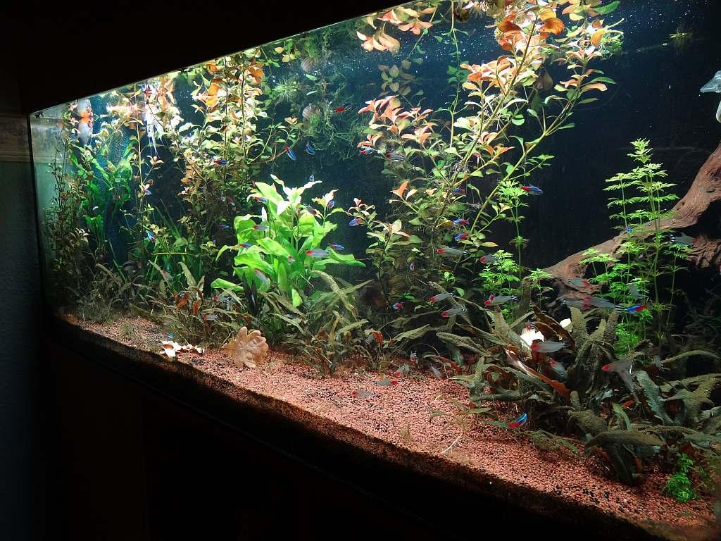 Einfach Zu Schmieren Aquarium 200 Ltr Komplett Mit Unterschrank Usw Heizstab Pumpe Filter