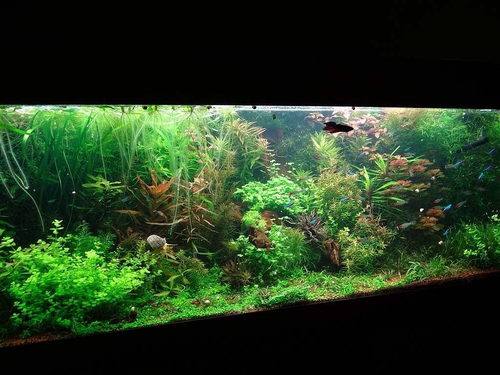 Komplett Mit Unterschrank Filter Usw Aquarium 200 Ltr Pumpe Einfach Zu Schmieren Heizstab