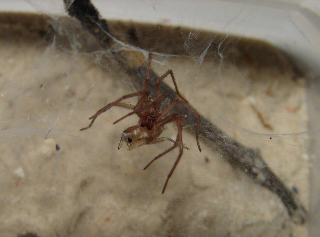 der spinnen und insektenthread seite 9 tierpark trforge forum. Black Bedroom Furniture Sets. Home Design Ideas