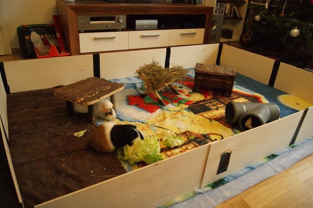 klappgehege wo kaufen meerschweinchen haltung. Black Bedroom Furniture Sets. Home Design Ideas