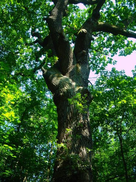 Baumkronenpfad im Nationalpark Hainich Dsc08286sr6u