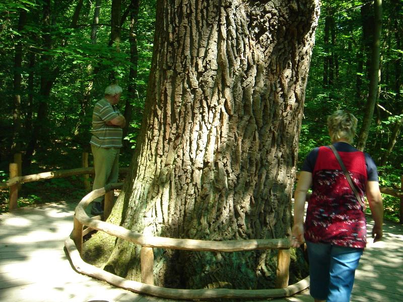 Baumkronenpfad im Nationalpark Hainich Dsc08288yr6i