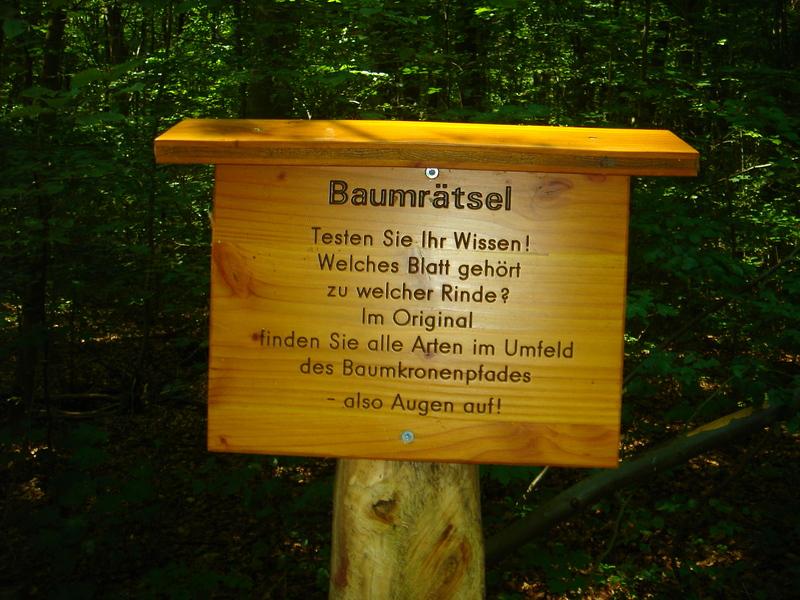 Baumkronenpfad im Nationalpark Hainich Dsc08289cphh