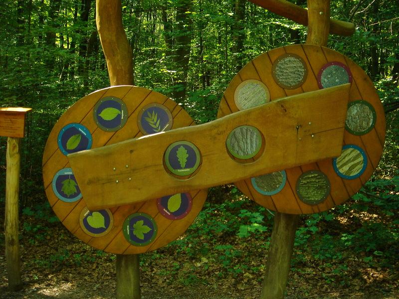 Baumkronenpfad im Nationalpark Hainich Dsc082901oqn