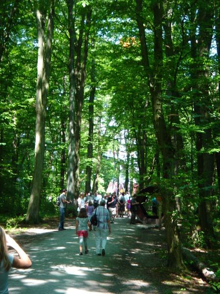 Baumkronenpfad im Nationalpark Hainich Dsc08293qppz