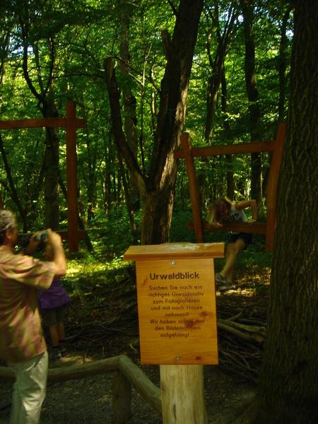 Baumkronenpfad im Nationalpark Hainich Dsc08294mozr