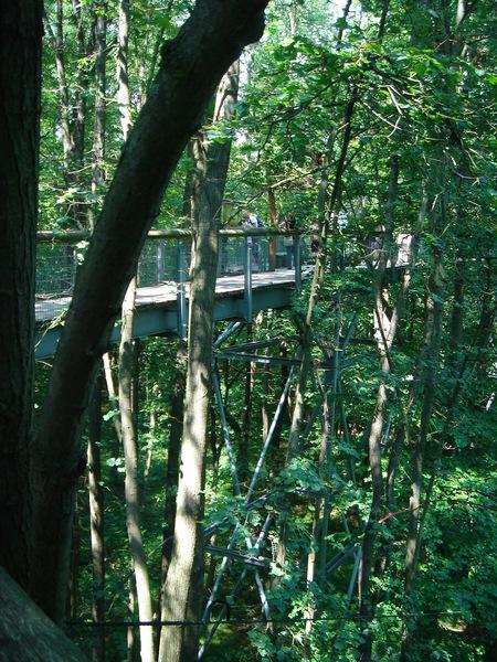 Baumkronenpfad im Nationalpark Hainich Dsc08298lroy
