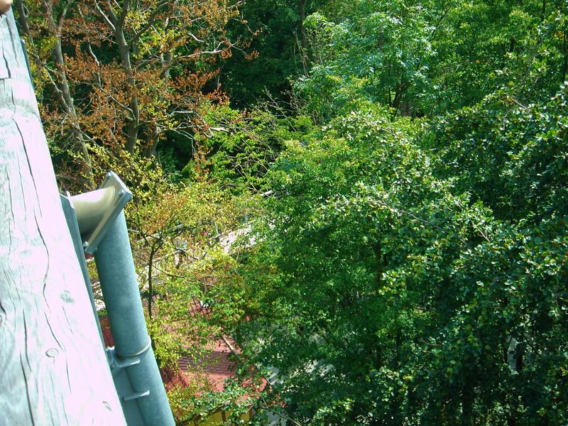 Baumkronenpfad im Nationalpark Hainich Dsc08302hoe1