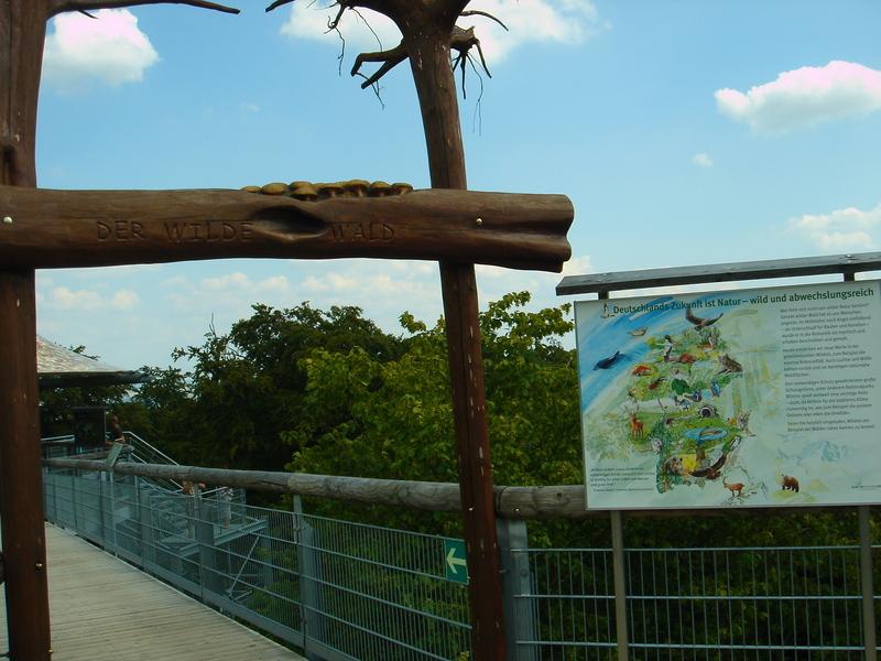 Baumkronenpfad im Nationalpark Hainich Dsc08307bpcy