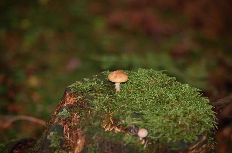 Ein Tag im Wald Dsc_72861aoct