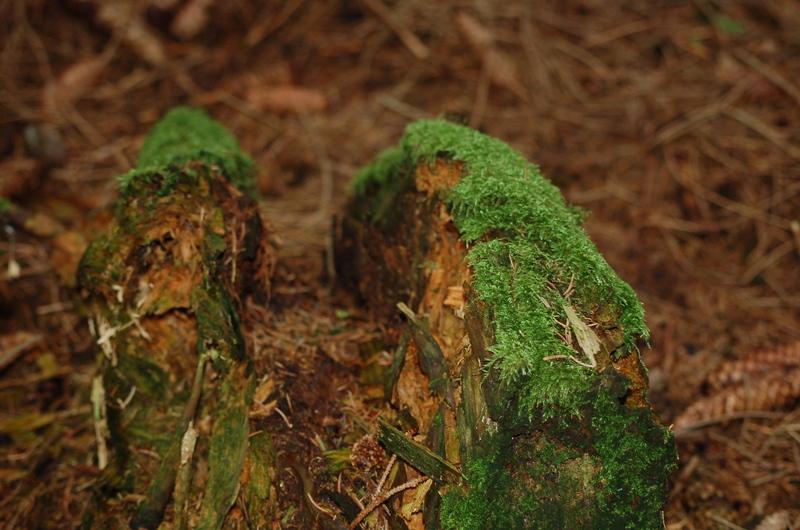 Ein Tag im Wald Dsc_7293t8oj1
