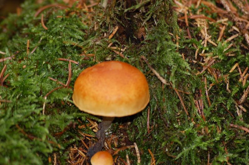 Ein Tag im Wald Dsc_7303w9pv9