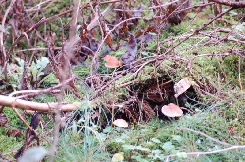 Ein Tag im Wald Dsc_7324d6p9l