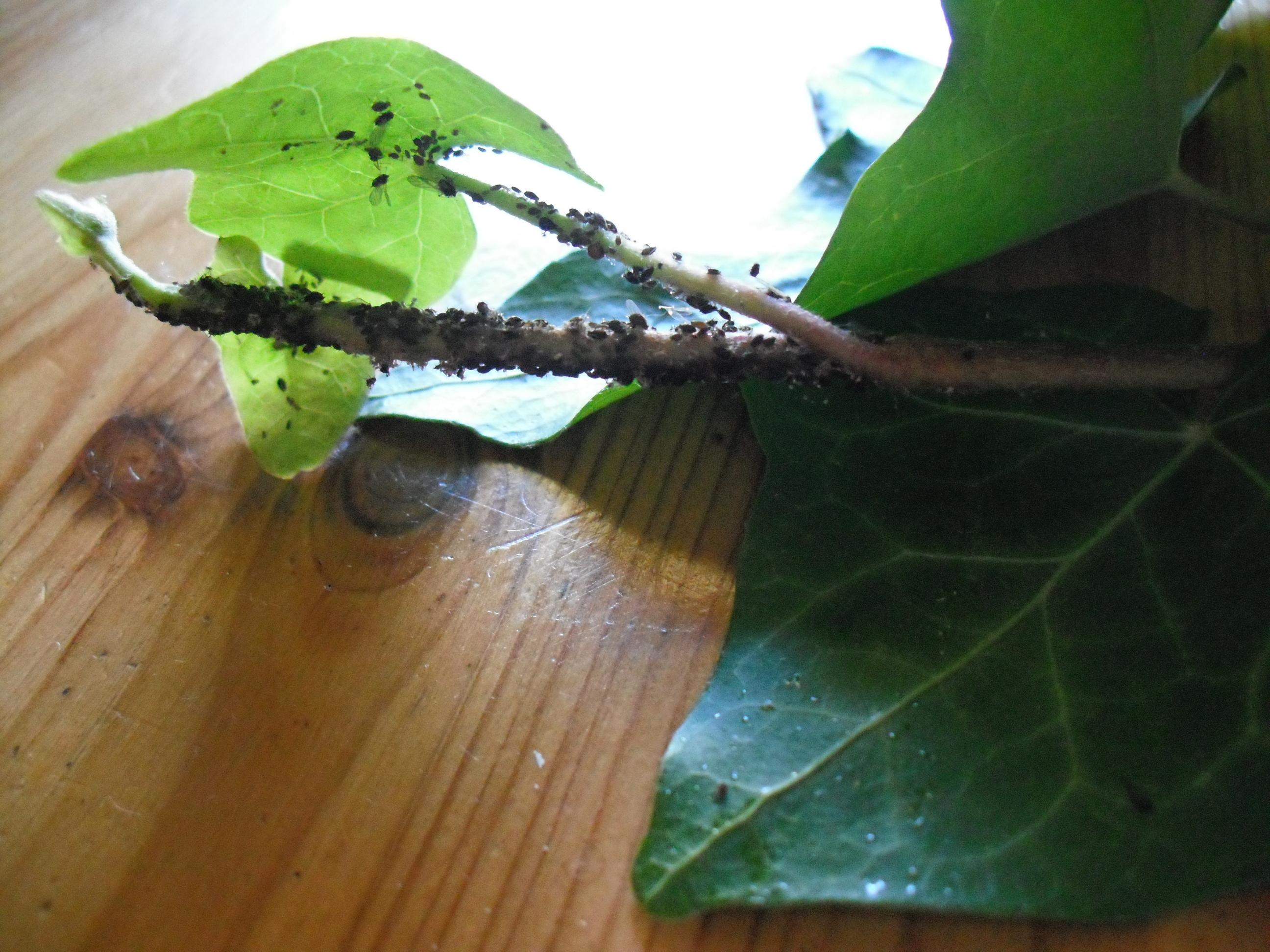 meine tomatenpflanzen sehen sooo traurig aus wer weiss. Black Bedroom Furniture Sets. Home Design Ideas