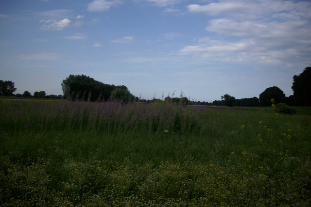 Feld und Wiesen in Lohausen Dsci2224jdbe