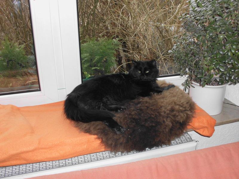 katzenschlafplatz lammfell seite 3 katzen forum bergkatzen. Black Bedroom Furniture Sets. Home Design Ideas