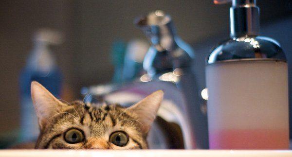 Przyczajone koty #2 18