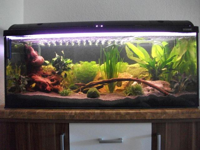Bis 200l einrichtung 160l aquarium aquarium forum for Aquarium einrichtung