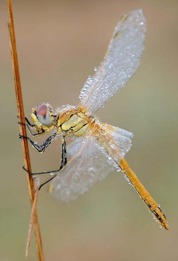 Makrofotografia: owady #3 2