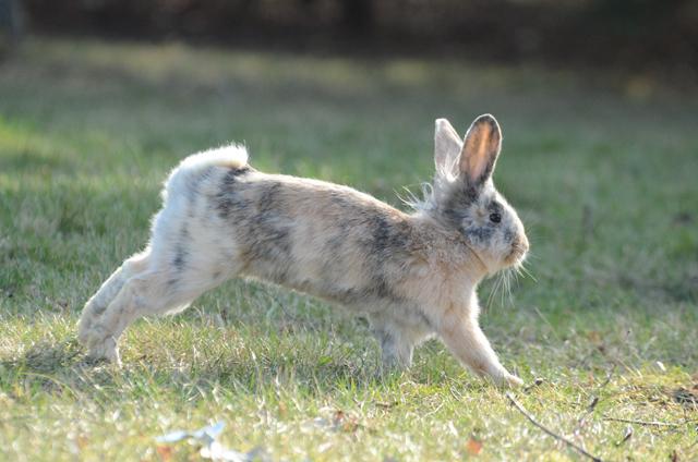 kaninchen laufen