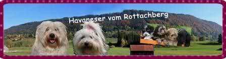 Kleine Havaneserzucht im Süden Bayerns. Wir haben einen oder höchstens zwei Würfe Havaneserwelpen im Jahr. Die Elterntiere sind untersucht und kerngesund, die Havaneserwelpen bekommen eine Ahnentafel des VRZ-DHS e.V..