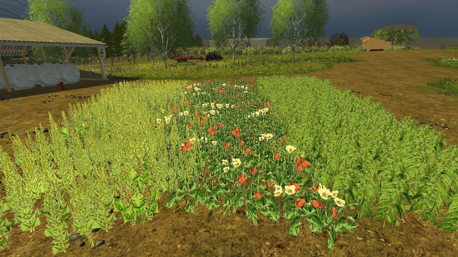 3 Nowe rośliny