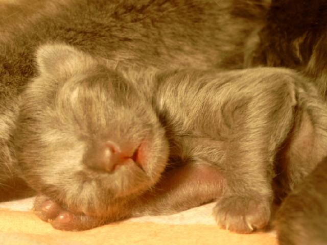 We've got kitten!!! Freitag005hyh