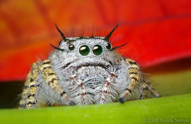 Makrofotografia - owady z bliska 33