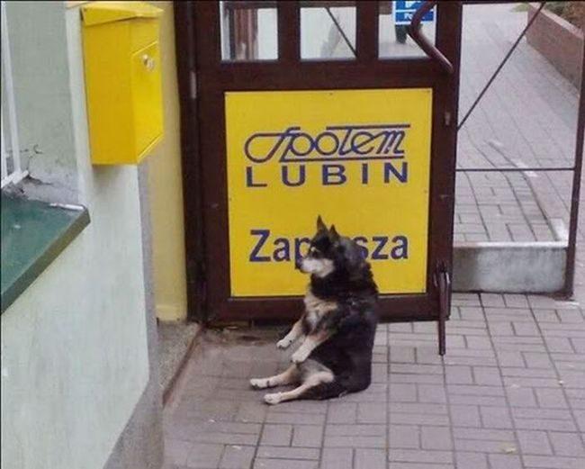 Zabawne zdjęcia psów 2