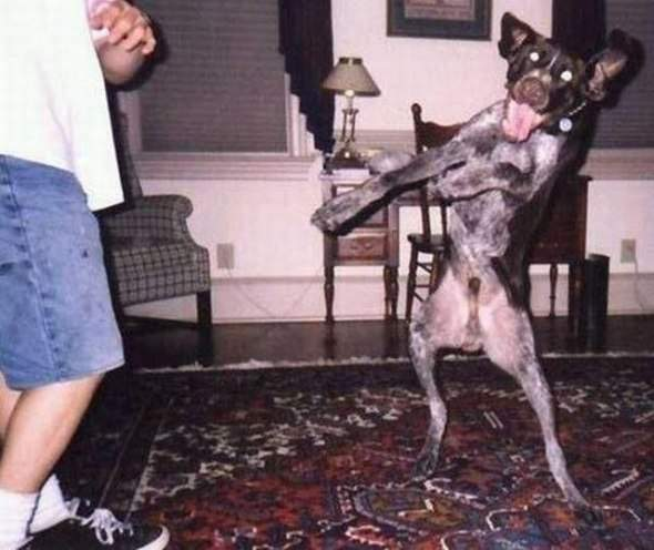 Pies - najlepszy przyjaciel człowieka 36