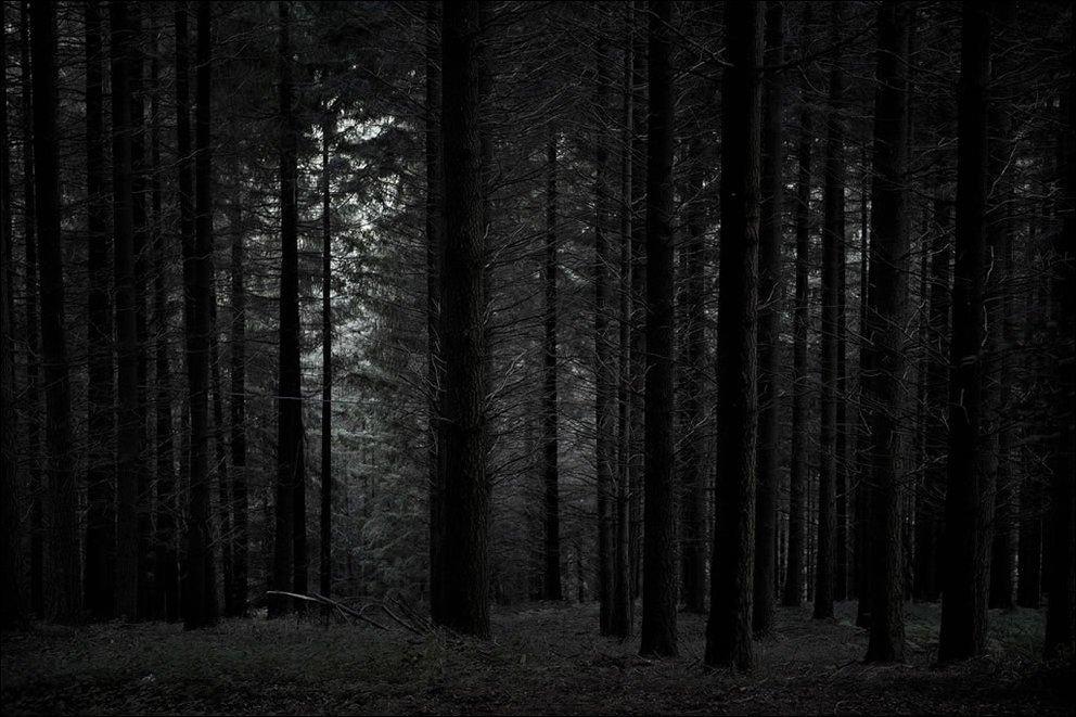 Tajemnicze lasy 34