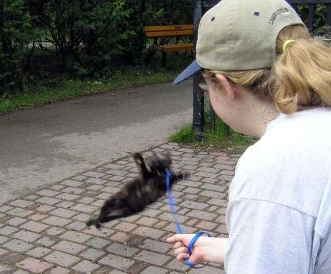 Koty na spacerze 2