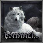 bommel...'s Avatar