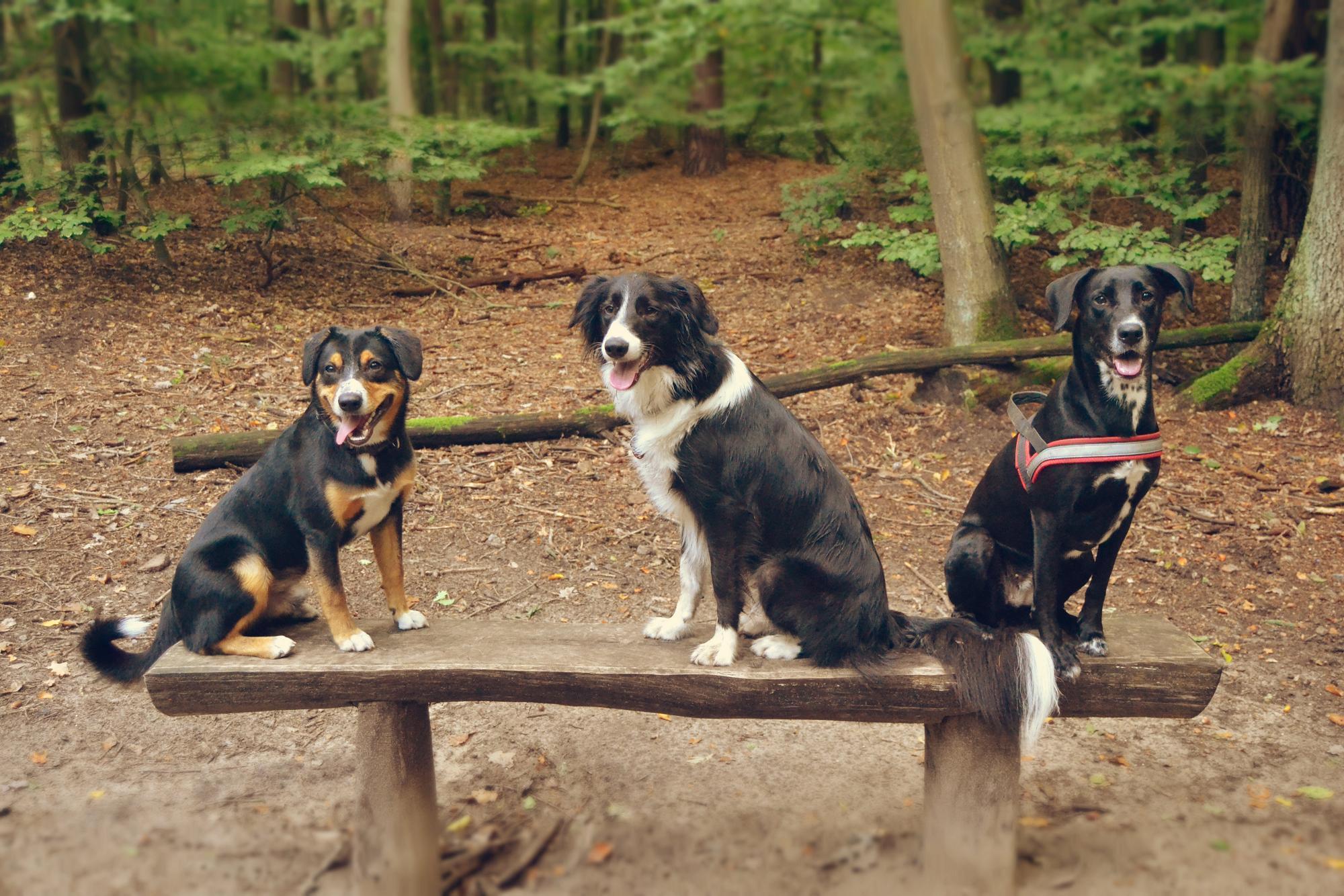 Der Hundethread - Seite 6 Gruppenbild_kr5zfv