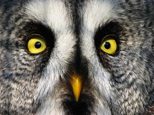 Sowa to dziwny ptak 12