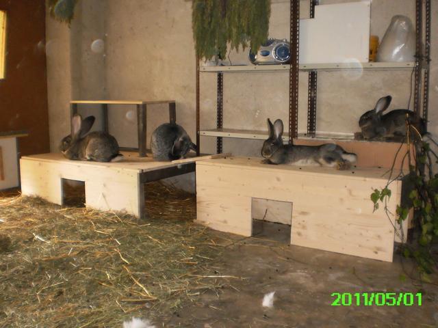 verliebt in deutsche riesen seite 18 kaninchen. Black Bedroom Furniture Sets. Home Design Ideas