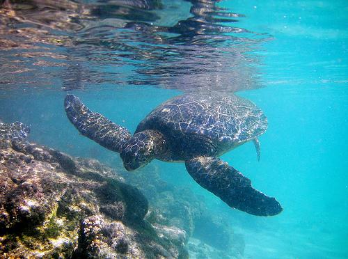 Yo Mana! Hawaii-snorkeling6pc6
