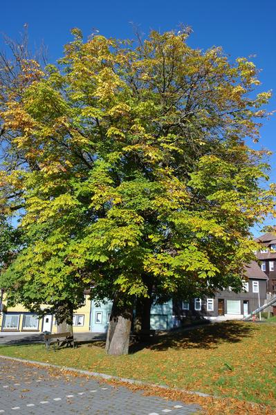 Tagesbilder(14.Okt.2011) Herbstmorgen14.10.2011b70f