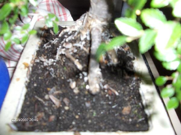 bonsai erde bonsai bonsai erde 2 liter f r laubb ume und bonsai erde substrat redrock bonsai. Black Bedroom Furniture Sets. Home Design Ideas