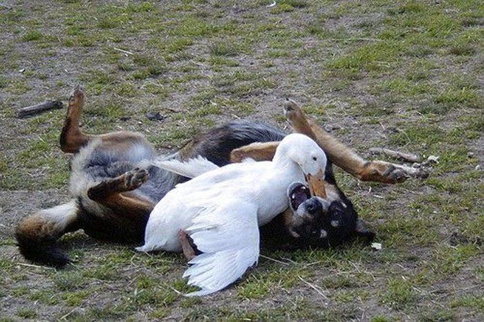 Zabawne zdjęcia psów 38