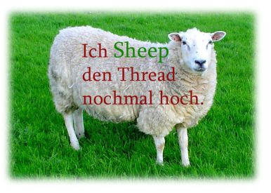 black sheep paderborn