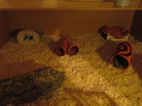 schweine ecke endlich fertig meerschweinchen haltung. Black Bedroom Furniture Sets. Home Design Ideas