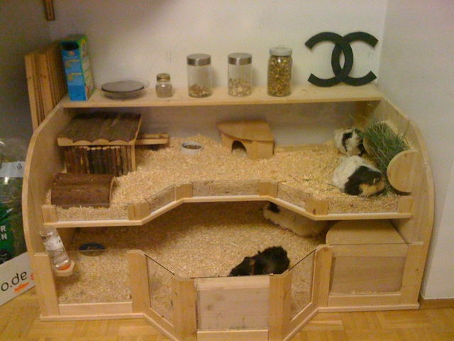h ngematte wie anbringen meerschweinchen haltung. Black Bedroom Furniture Sets. Home Design Ideas