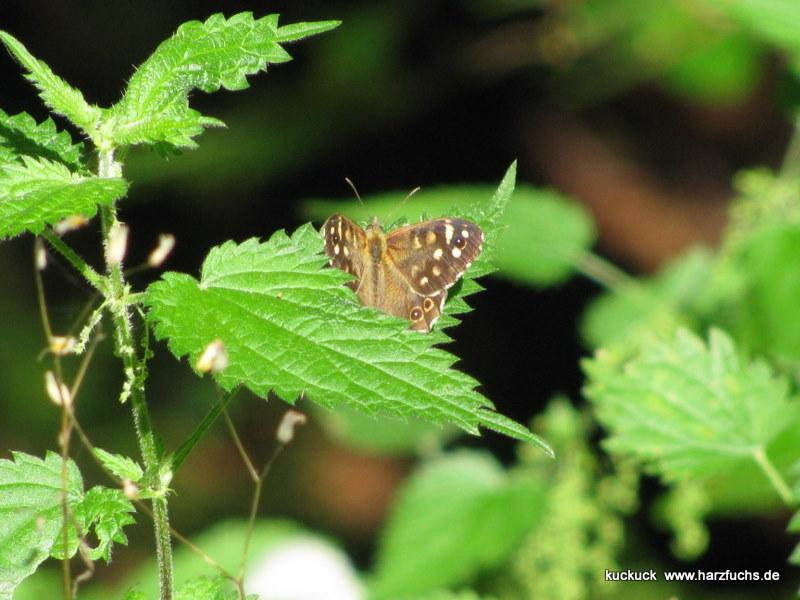 und noch Schmetterlinge.... Img_0962-1fpep