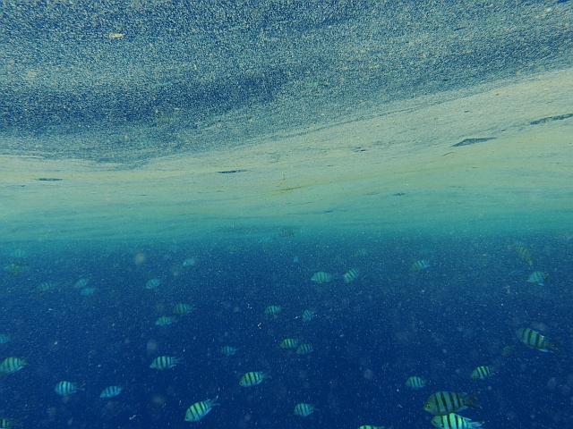 grüne cyanobakterien meerwasser