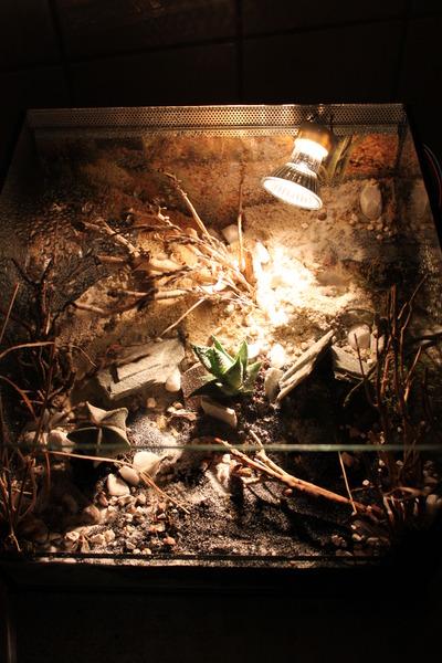 das forum rund um die skorpionhaltung mit kostenlosen kleinanzeigen. Black Bedroom Furniture Sets. Home Design Ideas