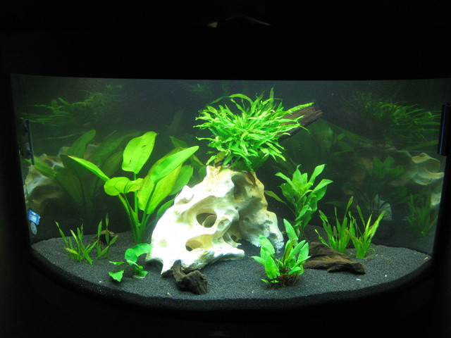 eure sch nsten aquarien. Black Bedroom Furniture Sets. Home Design Ideas