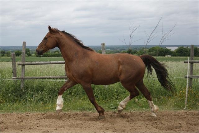 rund pferd geschichten