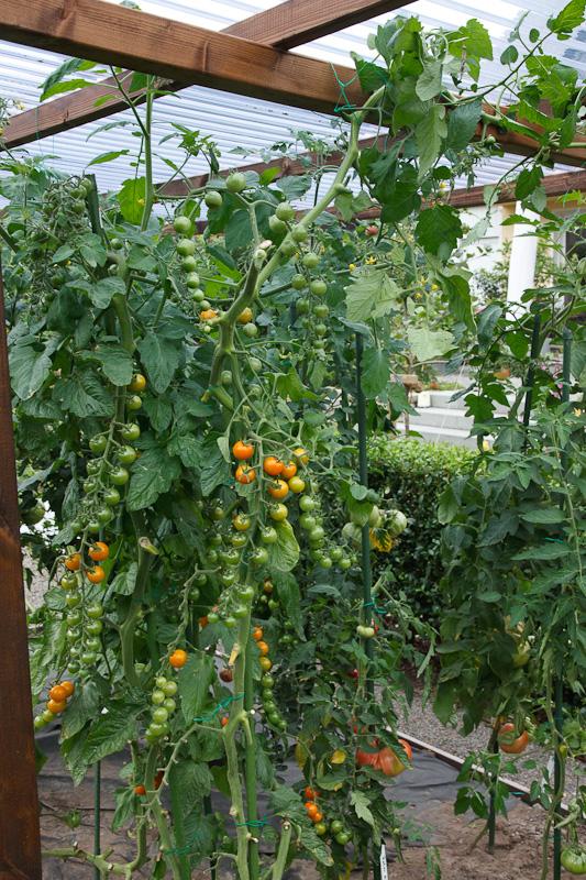 tomaten bersicht ber alte erhaltungsw rdige sorten und gute neuz chtungen seite 6. Black Bedroom Furniture Sets. Home Design Ideas