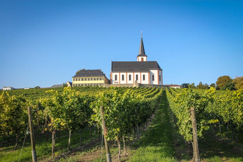Hochheim - Kirche/Weinberge